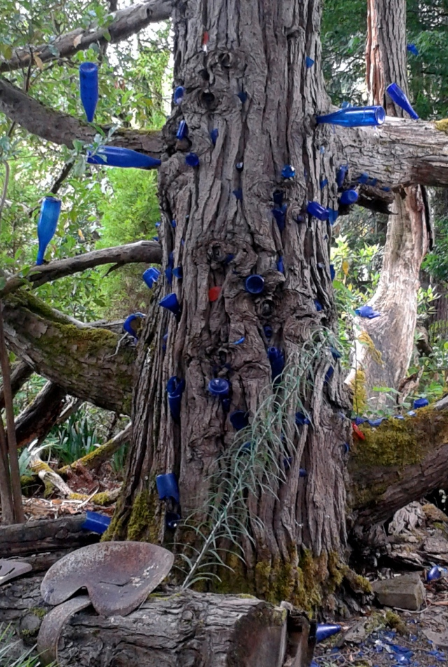 The most astonishing bottle tree. In places, the bark is engulfing the glass. You almost expect the tree to start moving toward you!