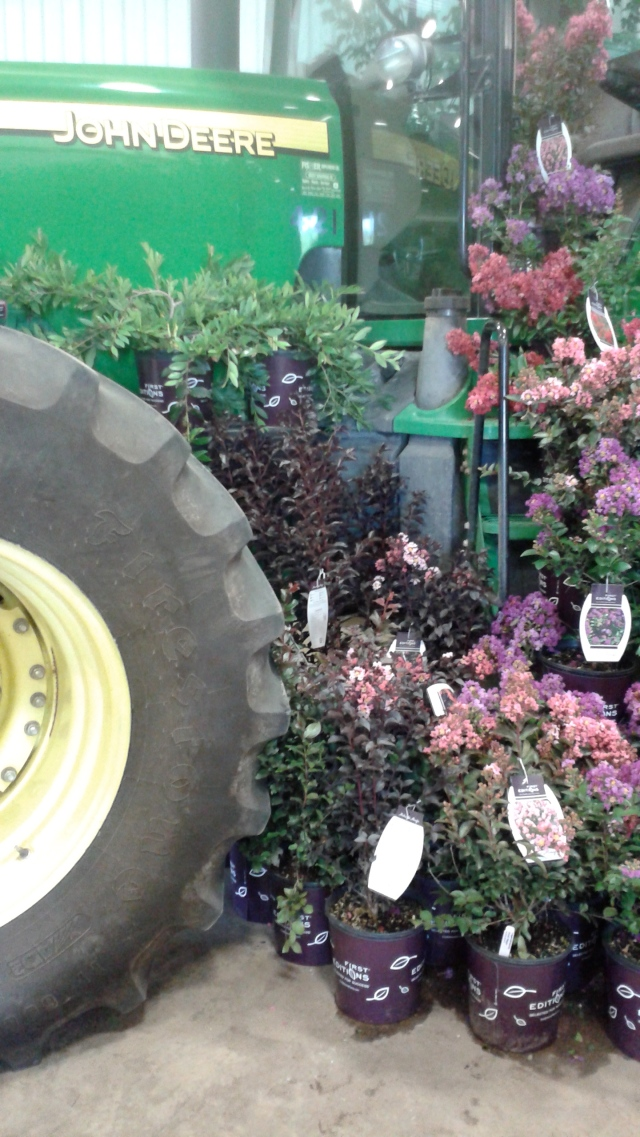 Plant displays at Bailey's