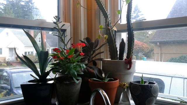 Started bringing in the tender varieties this past week. Yikes - the shelf above my kitchen sink is awfully crowded...
