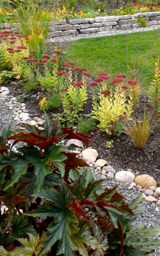 I love how the red foliage in the foreground is echoed in the red-flowering Sedums.