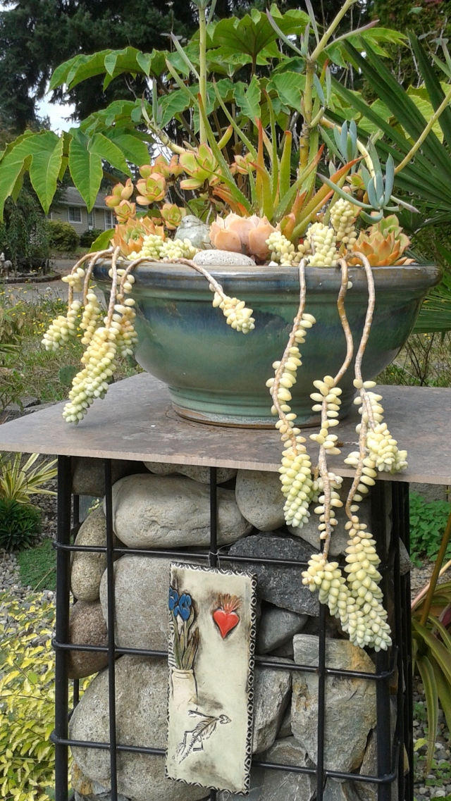 Great use of gabions in the garden - a pedestal for a planted pot.