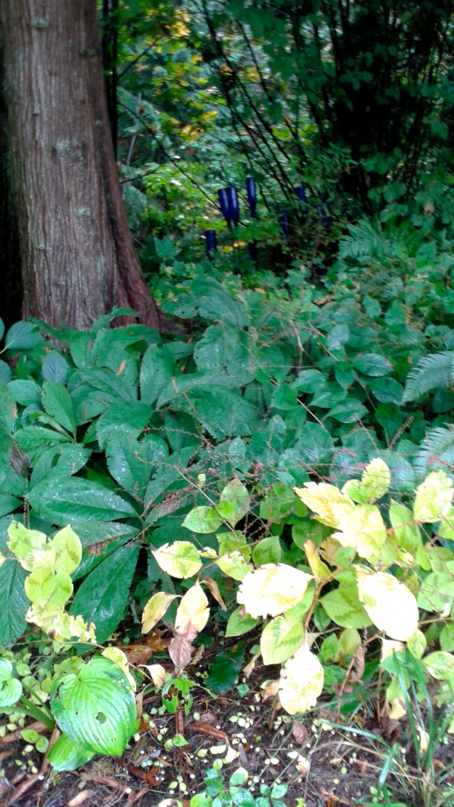 Hostas and Hellebores blend seamlessly...