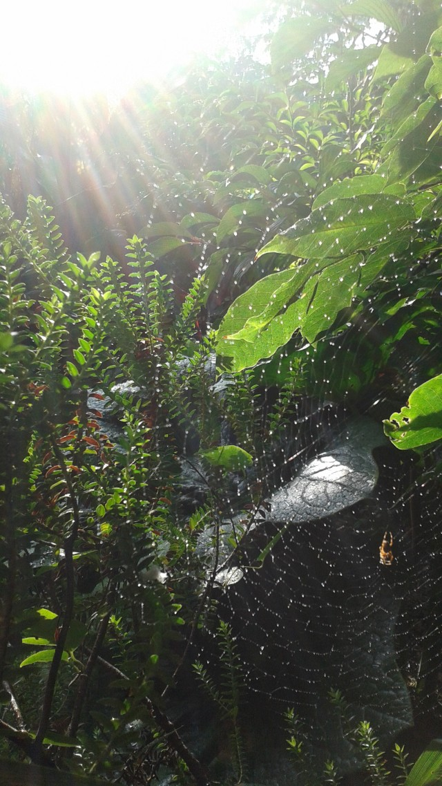 One of the best parts of fall - the incredible cob webs that seemingly appear overnight.