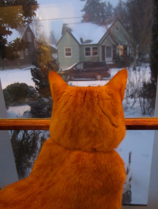 My dear kitty Manneman staring out at all the white. I  can just sense his consternation...