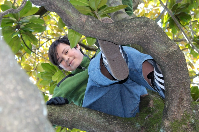 My youngest son in his favorite reading spot, high up in the Magnolia where the branches create both seating, backrest and footstool. Such a great tree!