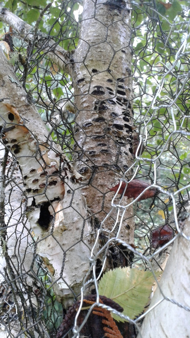 As we wondered around the garden, I saw this odd contraption - chicken wire wrapped around a tree that had number of small holes in its trunk.