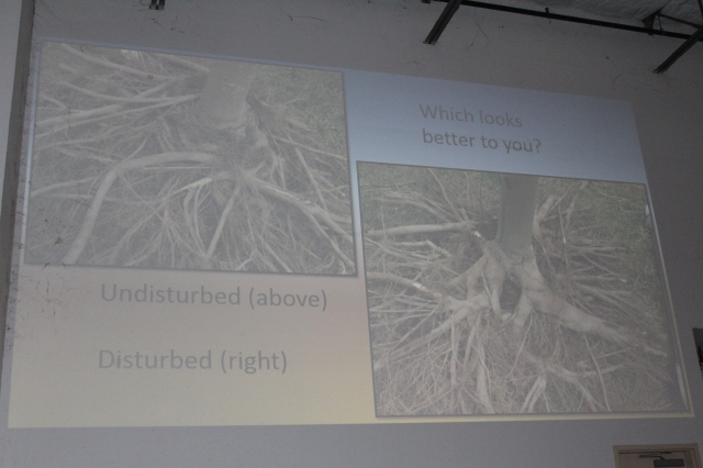 "Terrible photo of one of their slides, but hopefully you will be able to make it out. The photo on the left is of a tree planted as is. It's pretty much sitting on a doughnut of spiraling roots.  The tree on the right was brutally ""disturbed"" with lots of roots removed. The first year, not much above ground growth was noted, but the second year it took off, and has been doing beautifully ever since. In this case, it was well worth ""disturbing"" the tree, despite the first year's setback."