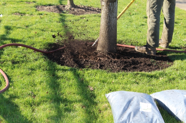 Air spade in action. Can you see the smaller root that is wrapping around the front of the trunk?