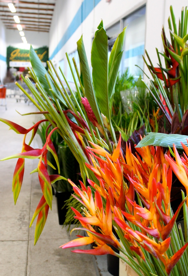 In the entry hall, you are met by the fiery colors of tropical flowers. What a treat on such a rainy day!