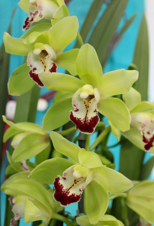 Loved the green orchids against the turquoise background.