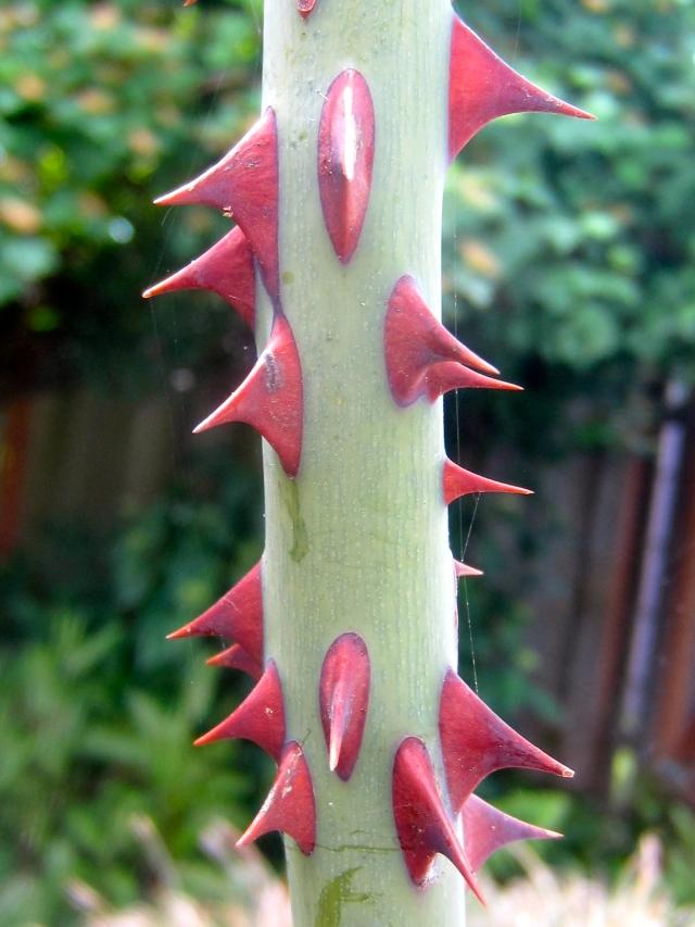 Thorns!