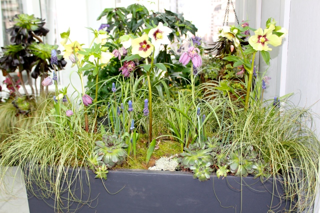 Here you see more of the planter, plus the sedums lining the edge of this arrangement.