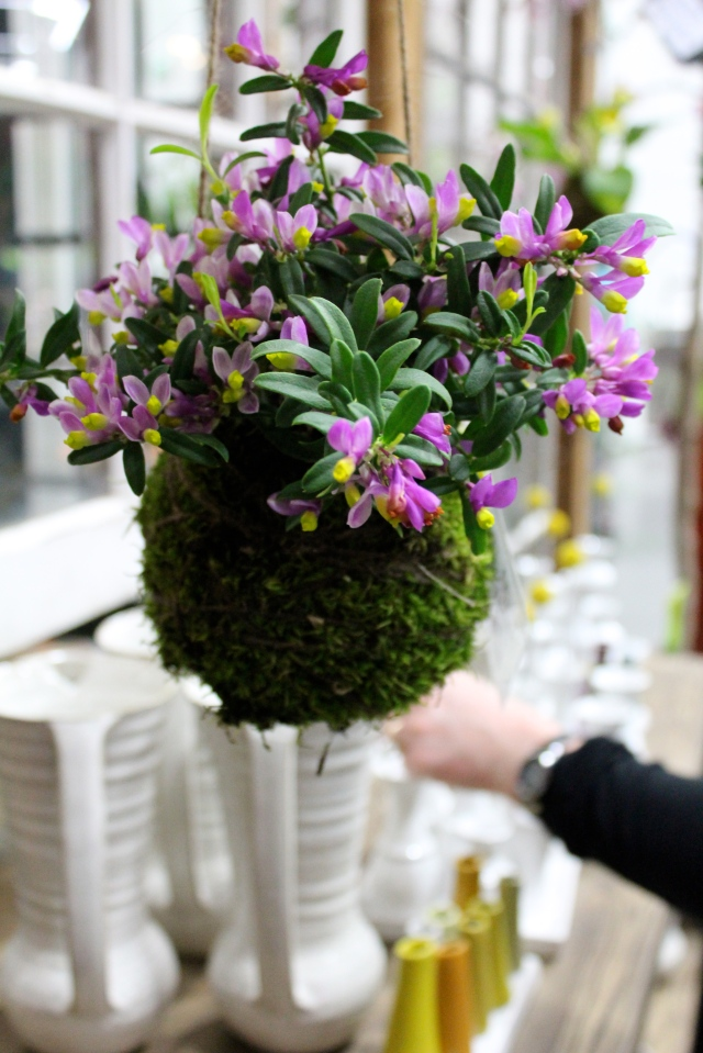 You can make it with just about any small plant. This one made with a Polygala caught my eye.