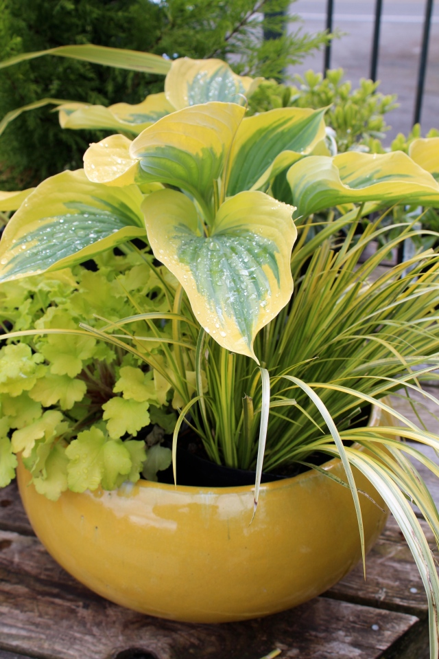 I had hoped to use a bowl in the same green for this shade arrangement,  but we must have sold them. The next best pot was one of the yellows.