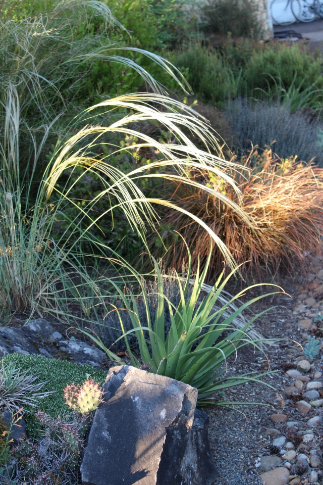 This grass gave me heart palpitations with sheer plant lust. What is it? Not sure, but I think it's Stipa grandis. Please correct me if I'm wrong...