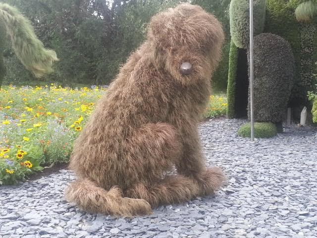 This hairy bronze sedge dog is a study in shaggy monochrome. Coolest thing ever.
