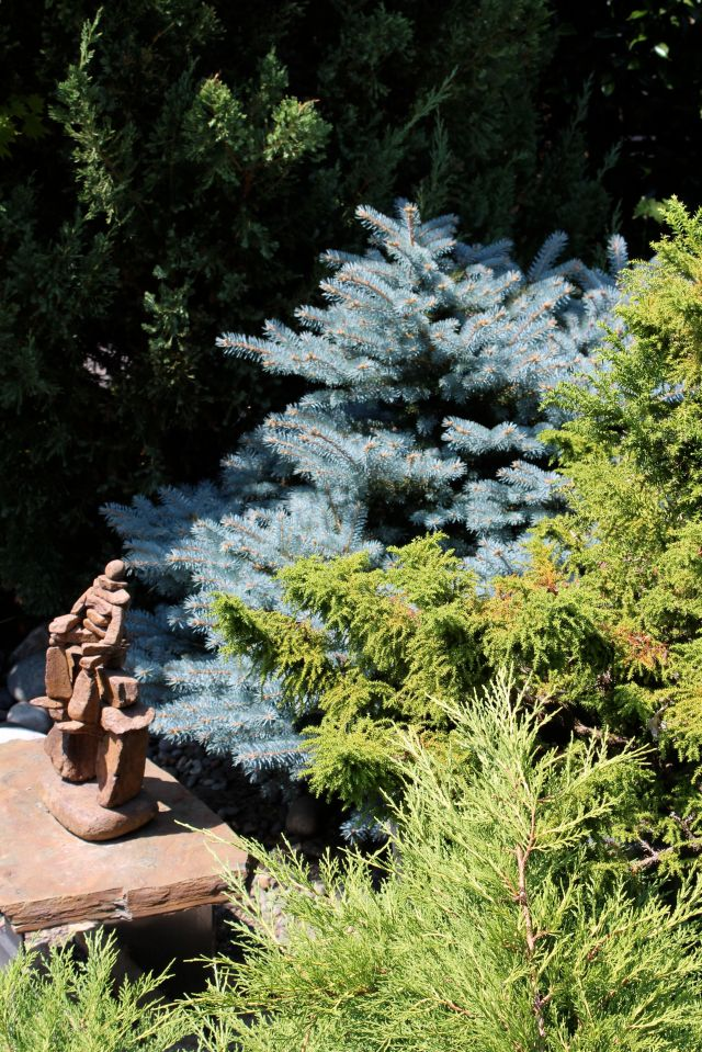 Notice how the colors and textures of the various conifers contrast with, and enhance each other. Conifers and other evergreens are abundant in this garden - for good reason. They are easy to care for, look good year-round, and there is very little leaf litter. Perfect for a garden intended to spend your old age in. And, perfect for anyone seeking a low-maintenance garden, for that matter.