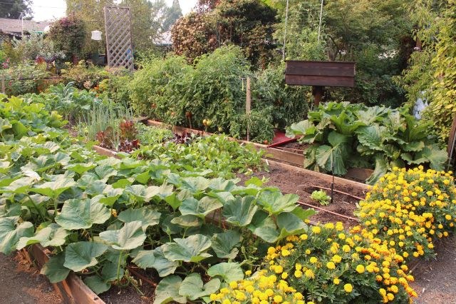 #Garden Conservancy Open Garden Tour #Prewitt garden