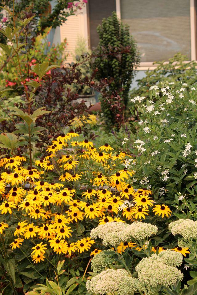 Front garden vignette...