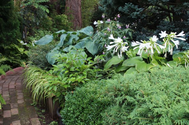 Lots of textures. The Hostas had a wonderful fragrance!