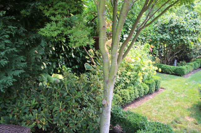 Boxwood hedges delineated the spaces.