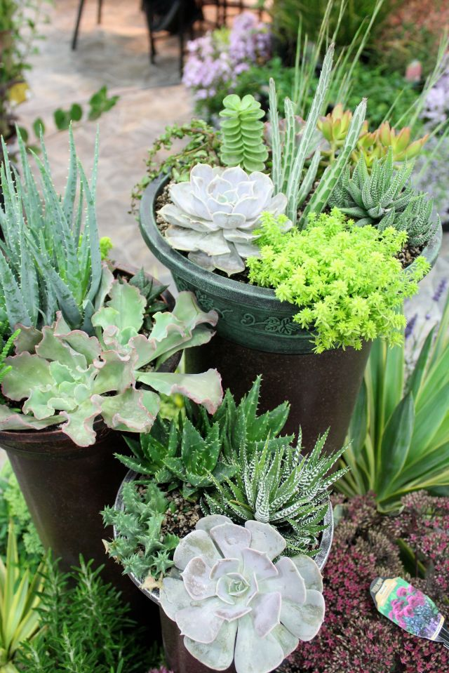 Lovely succulent planters.
