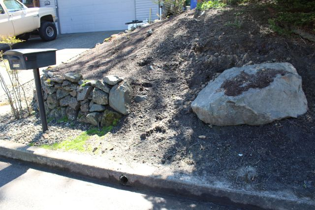 Her front yard sloped rather steeply down toward the street. There was a massive boulder that she wanted to leave in place, as  the roots of the Maple above it were located directly underneath it. Could I help her design a wall that would incorporate it without moving it? But of course!