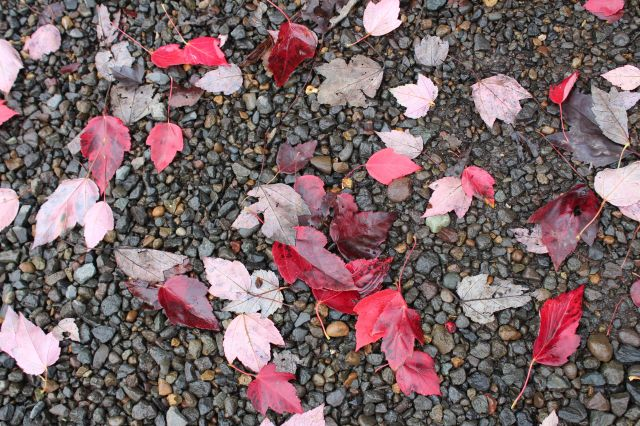 Red leaves littered the ground...