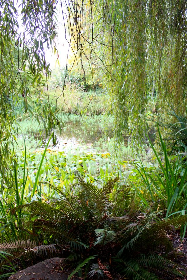 I think every pond with self-respect needs a Willow tree, from which shade one can admire the water and reflect on life's mysteries.
