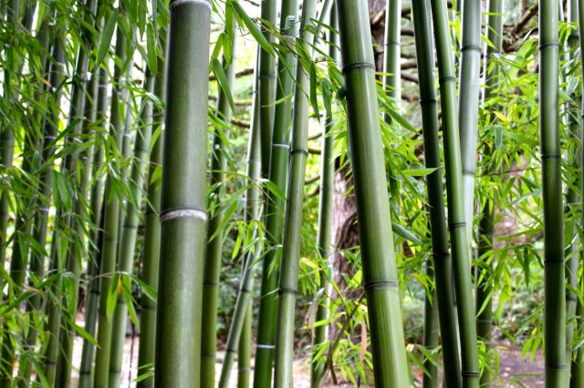 We played around in the bamboo forest for a while...
