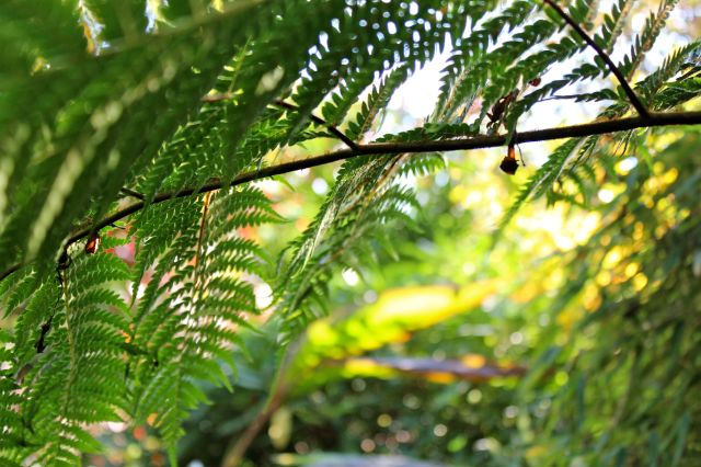The Tree fern