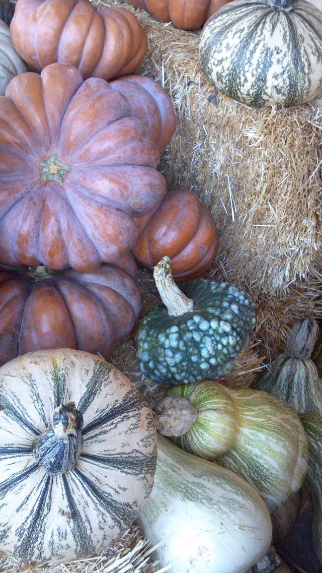 Pumpkins - 1