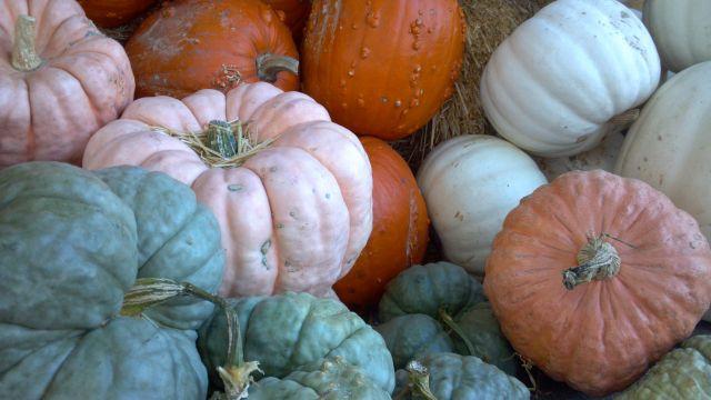Pumpkins - 2