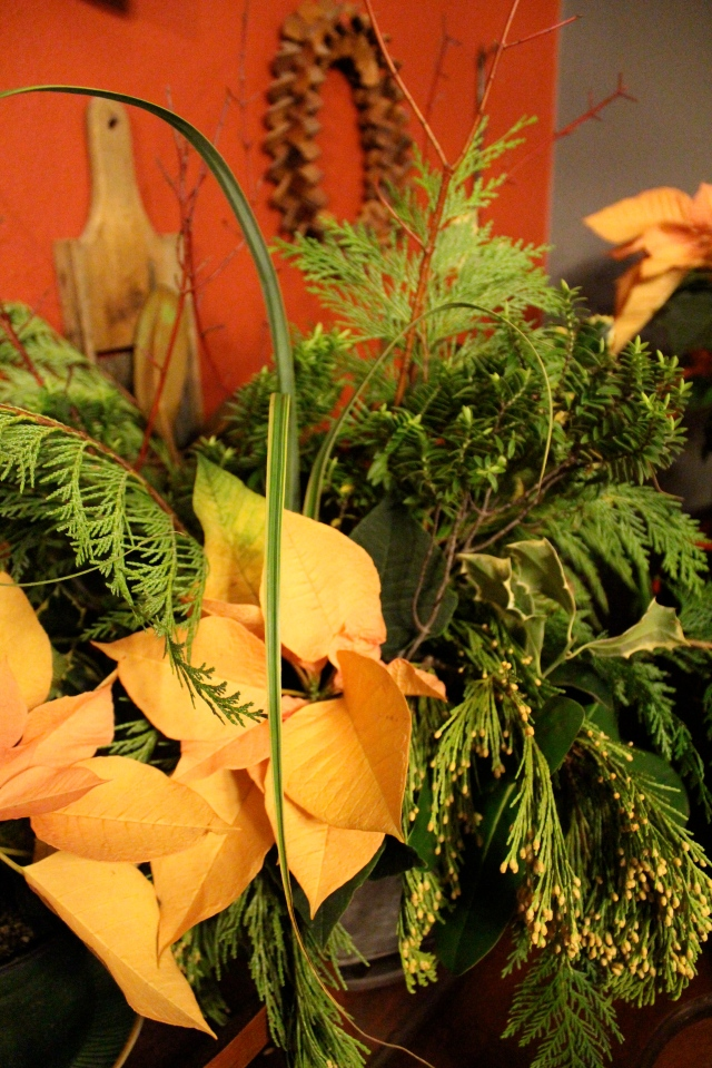This was attempt #2. I fell in love with the peachy orangey yellow of a Poinsettia variety called Autum Leaves . I paired it with some red-twig dogwood, the curly straps of Carex rekohu 'Sunrise', and some more traditional cut Christmas greens. It looks great, but even so, the photos I got did not do it justice, so it did not make the cut.