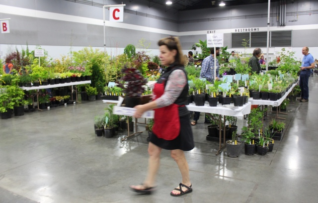 Check out the marvelous abundance. HPSO volunteers wore little red aprons, for easy recognition. Here is one early shopper, scurrying her pre-show stash to the Plant Holding Area.