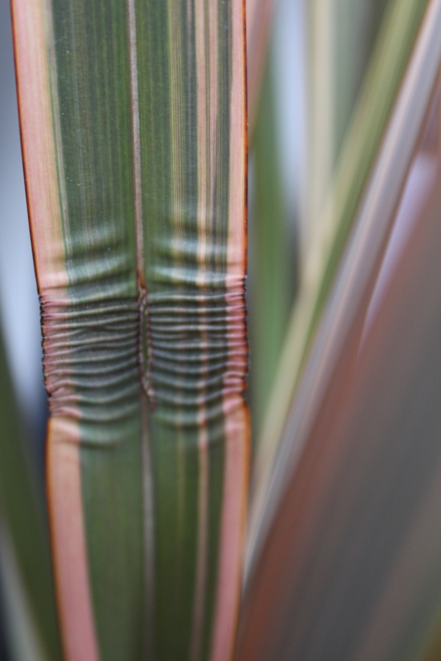 Crinkled flax leaf