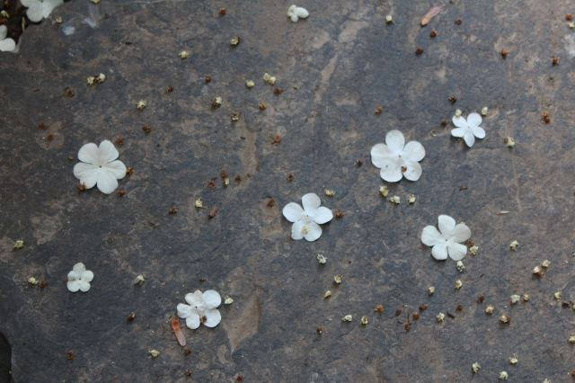 Occasionally, a wind gust creates a rain of flower confetti that fall on the ground.