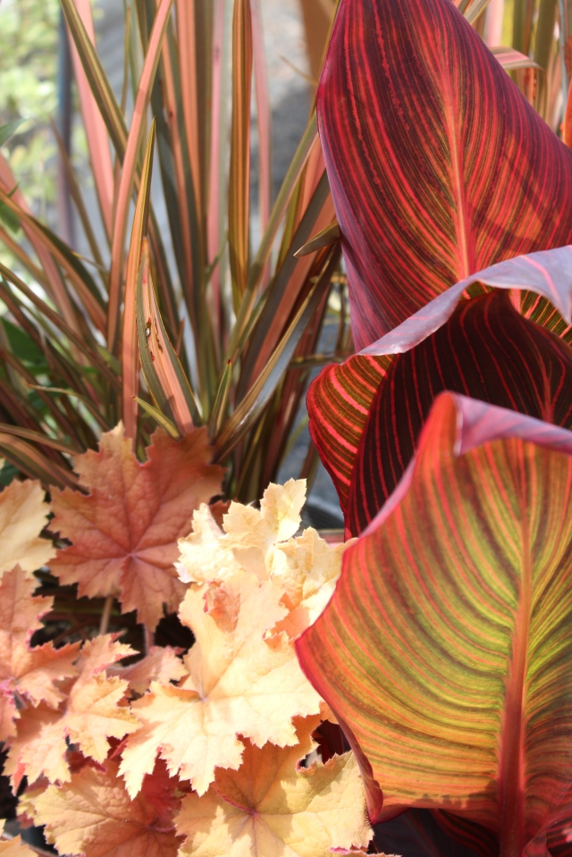 The spectacular leaves of Canna 'Durban', and the vertical counterpoint of Phormium 'Rainbow sunrise' are somewhat subdued with the addition of the supple caramel tones of Heuchera  'Kassandra'.