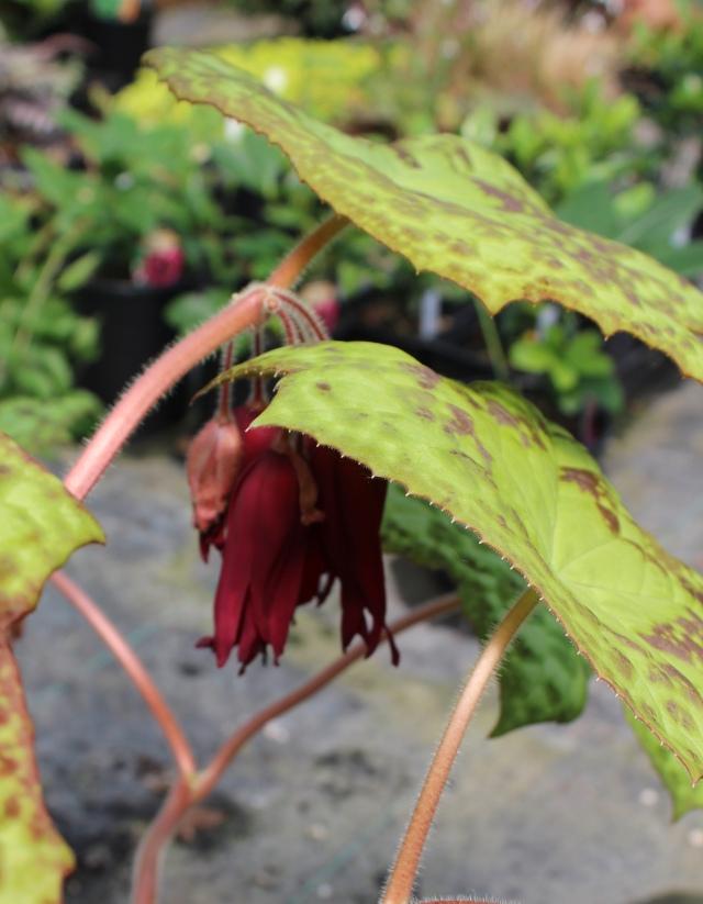 What an oddball plant, huh?