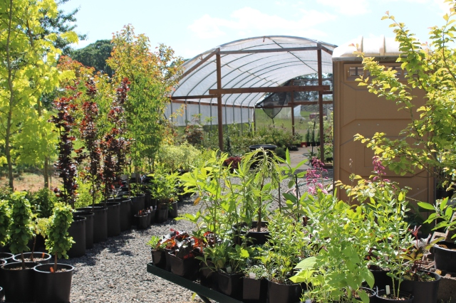 Inside and out, tidy rows of plants, happy in their pots.