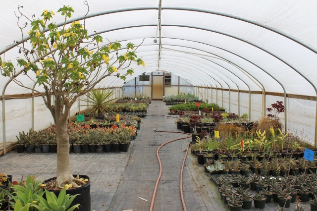 The greenhouses are full of unusual plants.