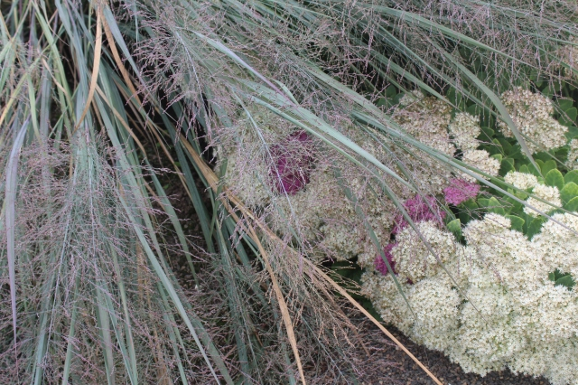Few things are as lovely as fine-textured grasses contrasted with the fleshy bulk of Sedums. Such an effective combo!