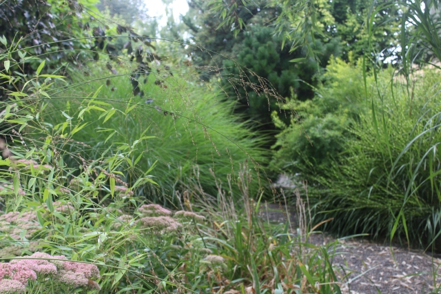 With all the pathways winding through large drifts of grasses, shrubs, huge conifers and trees, it is easy to lose yourself among the mature displays.