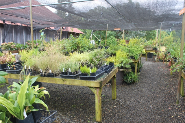 Naturally, I spent some time looking through the many tables of assorted cool plants.