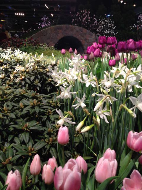 thalia-and-pink-tulips