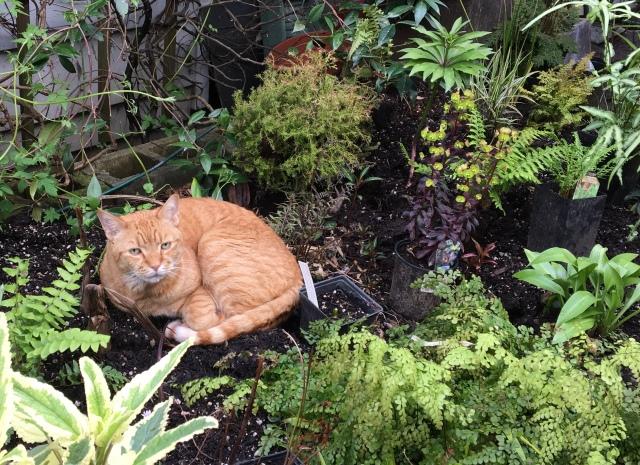 Gardener pal