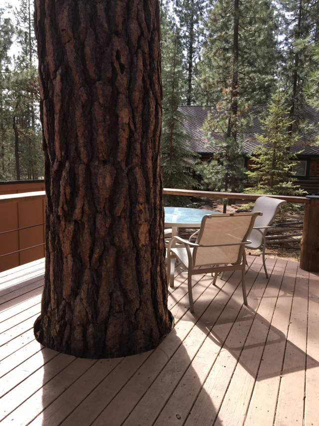 Deck built around a tree