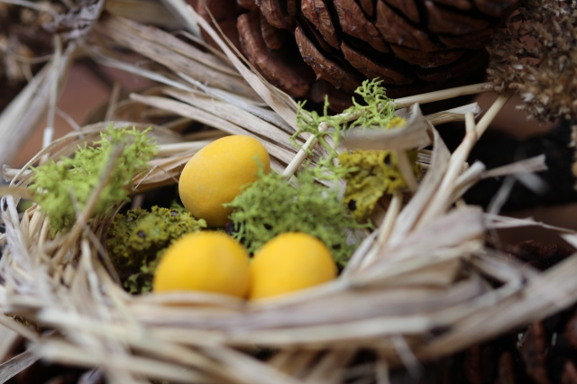 Birds nest with chocolate eggs