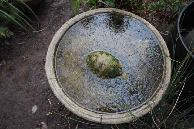 Frozen birdbath with turtle