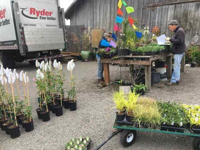 Plant delivery at Joy Creek Nursery